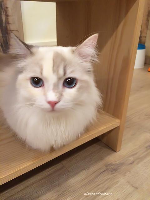 meowmi18